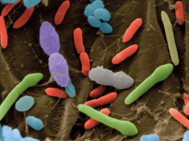 Бактериальная флора у человека начинает формироваться еще в утробе материи