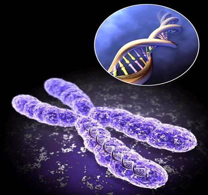 Новый метод диагностирования генетических отклонений при развитии плода