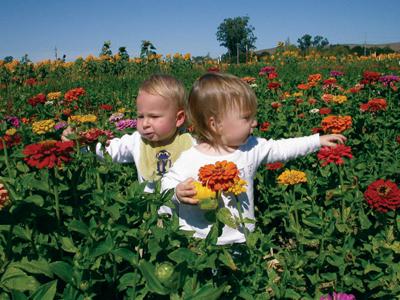 Чистота деревенского воздуха не всегда в пользу для детей