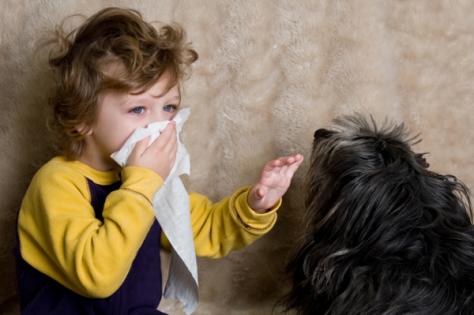 Детской аллергии нужно держать ухо в остро