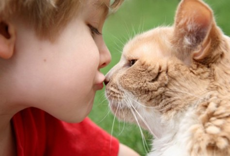 Кошачий паразит может поразить мозг ребенка