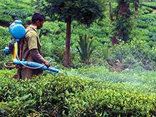 Открытие: для детей пестициды опаснее табачного дыма