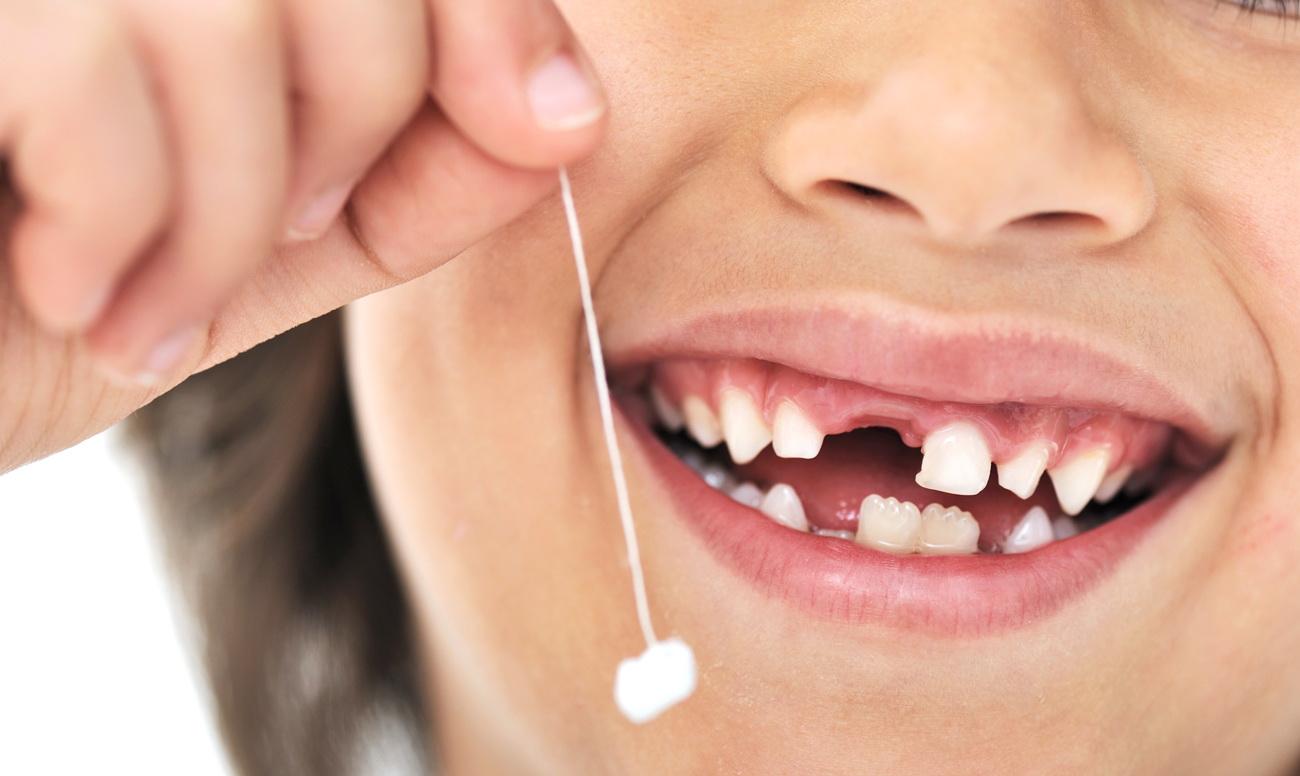 Почему у человека сначала вырастают молочные зубы?