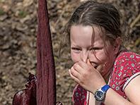 Запахи помогают детям принимать решения, показало исследование