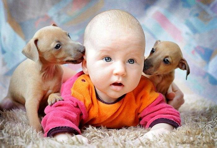 Детей животные привлекают больше, чем игрушки