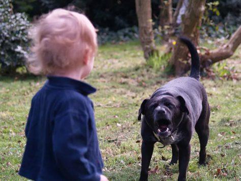 Укусы животных приводят к возникновению посттравматического синдрома у детей