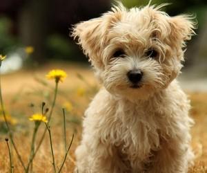 9 вещей, которым научат ребенка домашние животные
