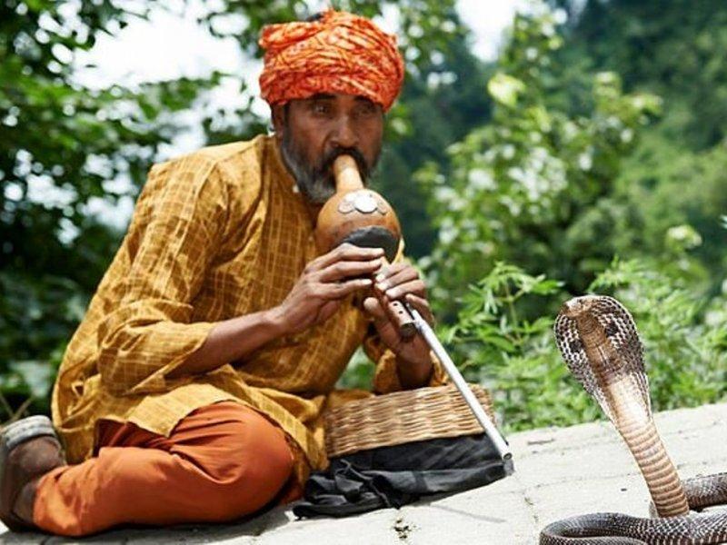 Индийская флейта для змей помогает недоношенным