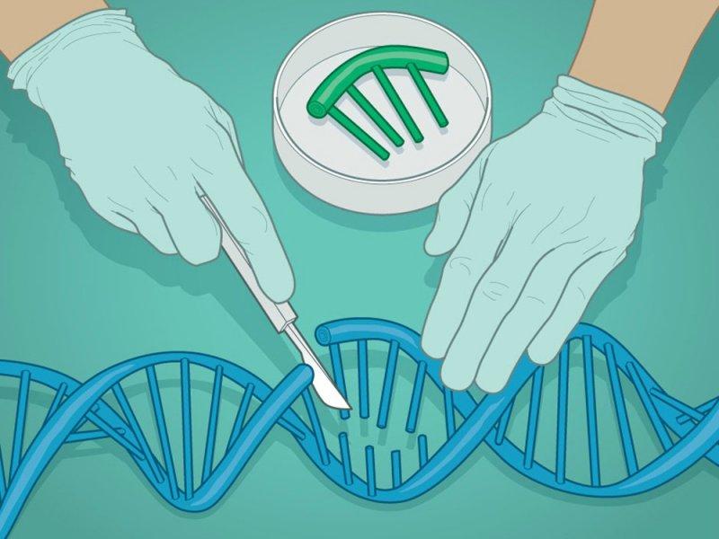 На свет уже мог появиться третий ребенок с редактурой генов