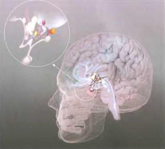 У детей, страдающих от заикания, уменьшен мозг
