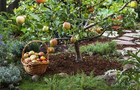 Польза ягод и фруктов для детей